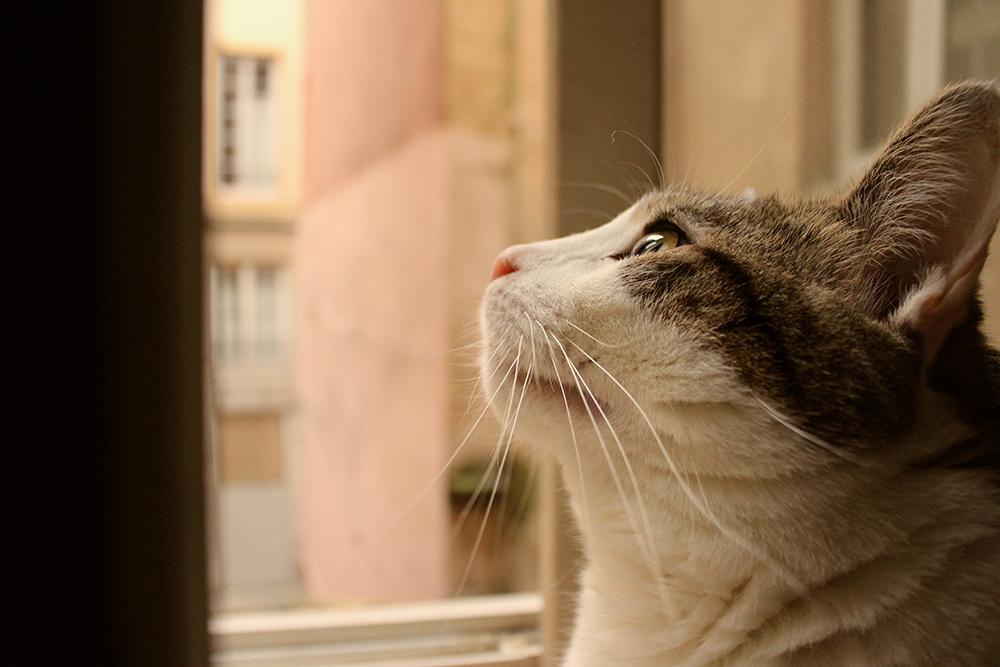 adopter un chat abandonne