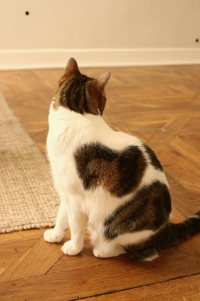 adopter-un-chat-conseil