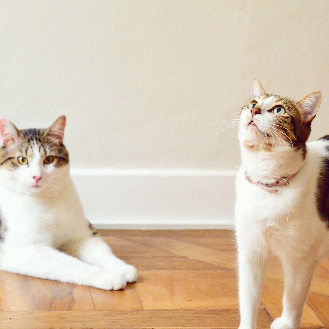 Conseil : Adopter et prendre soin de son chat