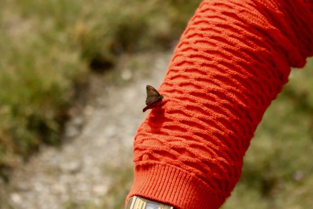 papillon-faune-flore-randonnee-alpes
